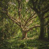 【デザインメモ】『木を見て森を見ず』になっていないか?